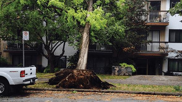 Vancouver Storm Roof Repair